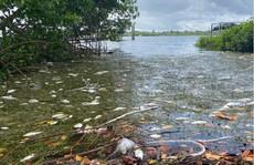 Mỹ: 'Thủy triều đỏ' dữ dội làm chết 600 tấn cá ở bang Florida