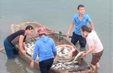Hàng chục tấn cá lồng chết bất thường ở Thanh Hóa