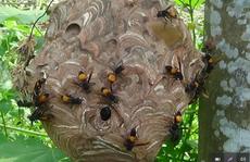 Bị đàn ong đốt khi sang nhà hàng xóm chơi, cháu bé tử vong
