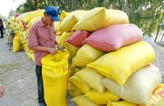 Kiến nghị tiếp tục 'bơm' vốn, giảm lãi suất để thu mua thóc gạo tại ĐBSCL