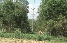 PC Quảng Ngãi: Bảo vệ lưới điện mùa khô