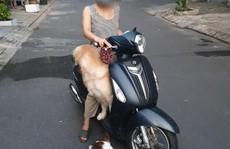 """Đà Nẵng: Dắt chó đi dạo khi đang """"ai ở đâu thì ở đó', nhiều người bị đề xuất xử phạt"""