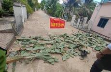"""Bất ngờ với hàng rào chống dịch bằng xương rồng """"có một không hai"""" ở Bình Định"""