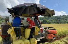 Biệt đội 'áo xanh tình nguyện' gặt lúa giúp dân vùng giãn cách