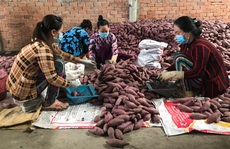 Thay đổi tư duy toàn diện để phát triển nông nghiệp