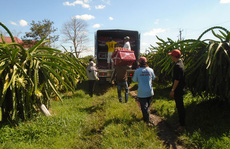 Gỡ vướng tiêu thụ, xuất khẩu nông sản