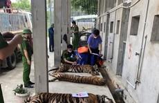 Vụ 17 con hổ lớn nuôi trong nhà dân: Thả về tự nhiên hổ có xu hướng kiếm ăn gần khu dân cư