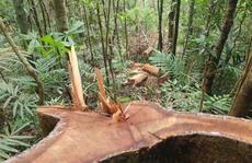 Cận cảnh tàn phá rừng nghiêm trọng ở Đắk Lắk