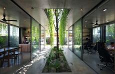 Ngôi nhà đa năng với mái tranh, cây xanh phủ kín ở Quảng Nam