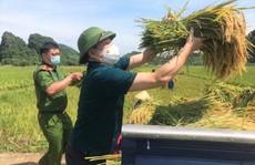 Bí thư huyện ở Thanh Hóa xuống đồng giúp dân gặt lúa chạy bão số 5