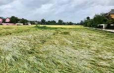 Miền Trung đang mưa tầm tã, ruộng lúa ngã đổ, 1 tàu gặp nạn