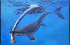 'Quái vật miệng dài' từng cai trị đại dương cổ đại