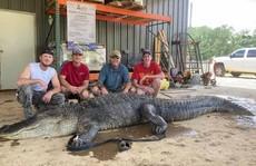 Mỹ: Phát hiện cổ vật ngàn năm trong bụng cá sấu 'quái vật'