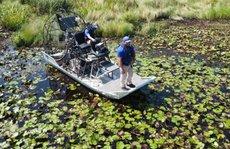 Mỹ: Phát hiện thi thể trong bụng cá sấu nặng hơn 200 kg