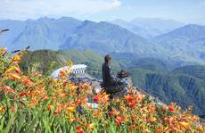 Hoa nở rực rỡ trên đường lên đỉnh Fansipan