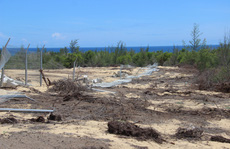 Phá 5,26 ha rừng phòng hộ ven biển, doanh nghiệp chỉ bị đề xuất phạt hành chính
