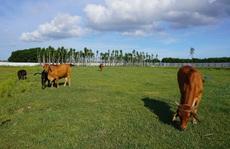 Dự án 670 tỉ đồng 'đắp chiếu', thành bãi chăn bò