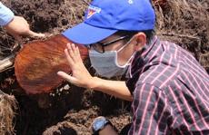 Bất thường trong báo cáo vụ phá 5,26 ha rừng phòng hộ ven biển Bình Định