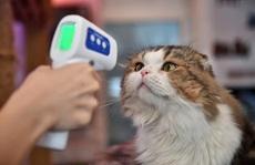 Virus SARS-CoV-2 có lây từ chó, mèo sang người không?