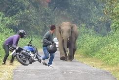 Đi bộ buổi sáng, bị voi rừng giẫm chết