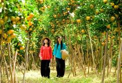 Phóng sự: Những loại trái cây Tết lạ và hiếm ở miền Tây