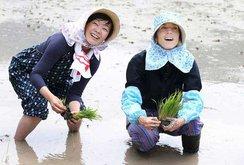 Clip: Đại sứ Mỹ tại Nhật Bản và đệ nhất phu nhân Akie Abe cấy lúa