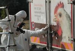 Áo: Phát hiện 50 thi thể phân hủy trong xe tải