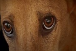 """""""Về đi Vàng ơi…"""" - hãy đồng cảm cùng loài chó"""