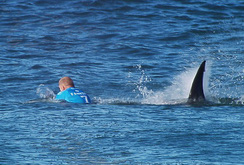 """""""Thót tim"""" vận động viên lướt ván bị cá mập tấn công"""