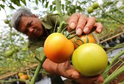 Những loại rau, củ, quả độc, lạ, đẹp ở Đà Lạt