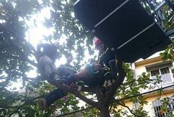 Giải cứu hai thanh niên ngáo đá, gào thét trên cây, trên mái nhà