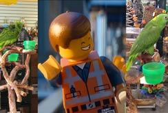 Nghe vẹt hát bài hit nhạc phim The Lego Movie