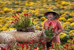 Phóng sự: Làng hoa Sa Đéc khoe sắc hoa xuân