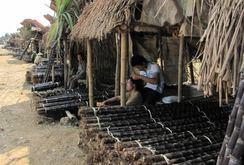 Như hành tím, như dưa hấu, 1.000 ha mía tím ở Hòa Bình bị đốt bỏ