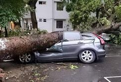 5 tỉ đồng bồi thường cho những ô tô hư hỏng sau trận dông, lốc ở Hà Nội