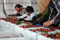 Việt Nam được xuất khẩu trái vải sang Úc