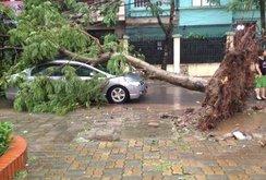 Dông, lốc dữ dội ở Hà Nội: 2 người chết, hơn 500 cây xanh bật gốc