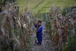 Triều Tiên hạn hán nặng nhất 100 năm, nguy cơ thiếu đói lớn
