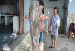 Bắt được cá lăng khủng đuôi đỏ nặng 43 kg