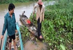 Ghi nhanh: Cá chết bất thường ở thượng nguồn sông Sài Gòn