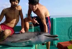 Bản tin NLĐ ngày 15-11: Xác định nhóm ngư dân xẻ thịt cá heo ngay trên tàu
