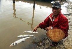 Cá chết ở Thừa Thiên - Huế là do nước biển nhiễm độc kim loại nặng