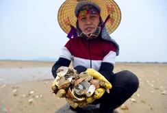 Video: Ngao chết trắng đầm ở Hà Tĩnh