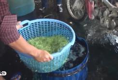 Bản tin NLĐ ngày 12-9: Hóa chất bẩn sử dụng tràn lan