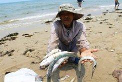 Video cá biển chết hàng loạt ở Quảng Trị