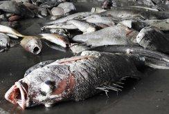 Bản tin NLĐ ngày 27-6: Sắp công bố nguyên nhân cá chết ở các tỉnh miền Trung