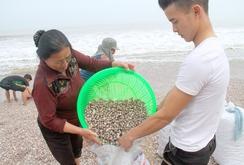 """Bản tin NLĐ ngày 20-12: Dân Hà Tĩnh trúng """"lộc biển"""""""