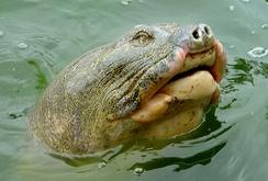 Bản tin đặc biệt cuối tuần ngày 23-1: Nên có cụ rùa mới cho Hồ Gươm?