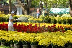 TP HCM có 128 chợ hoa Tết Bính Thân
