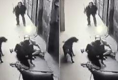 Video: 4 con chó dữ cắn nát quần áo ông chủ
